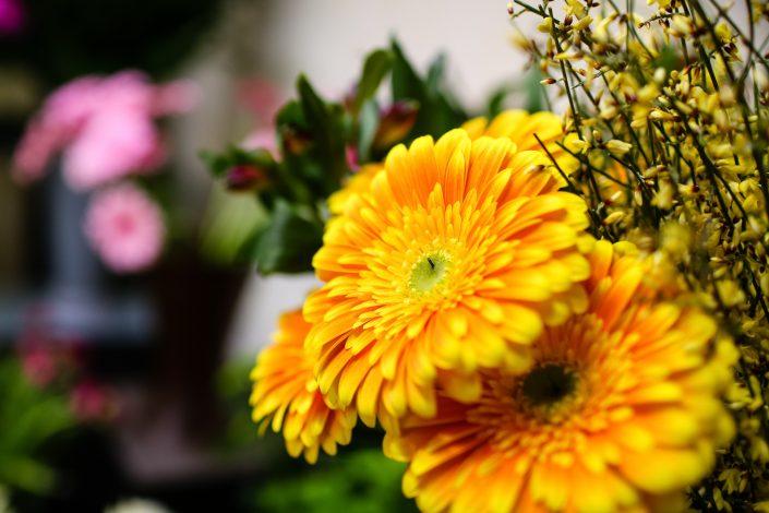 leuchtend gelbe und orange Blumen
